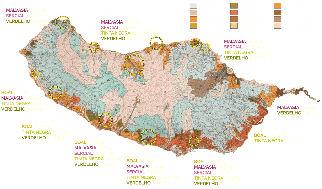 madeira wine map